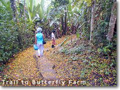 Trail to Butterfly Farm
